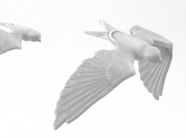 Swallow 6