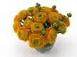 Orange Ranunculus 2