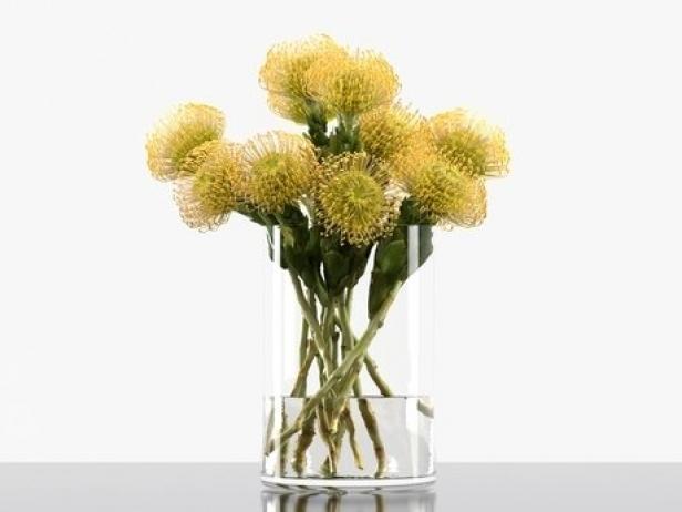 Pincushion Protea 4