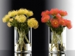 Pincushion Protea 1