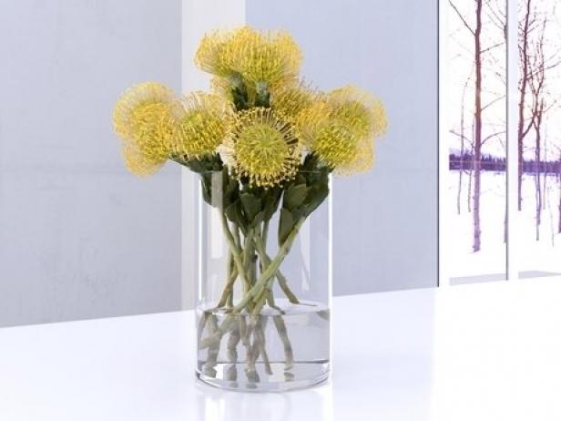 Pincushion Protea 6