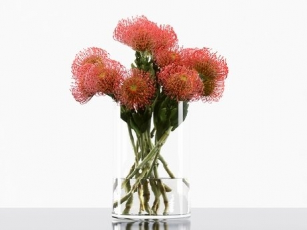 Pincushion Protea 5