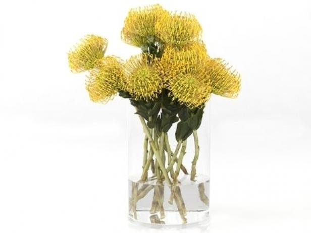 Pincushion Protea 8