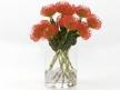 Pincushion Protea 7