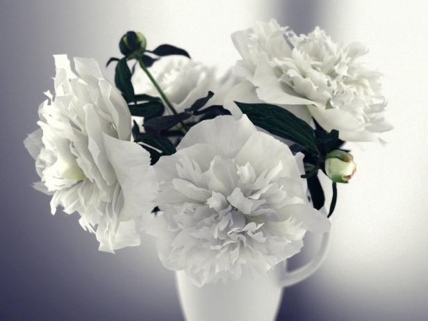 White Peonies 3