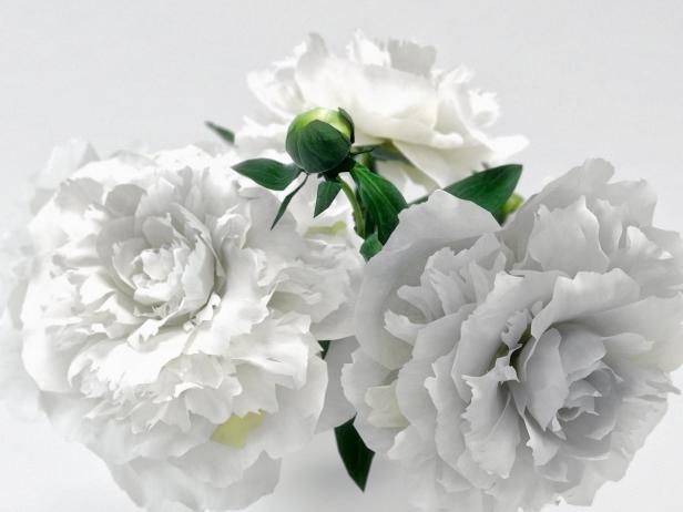 White Peonies 5