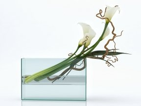 White Callas in Square Vase