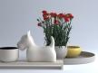 Carnations 01 1