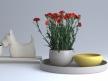 Carnations 01 2