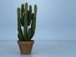 Euphorbia 4