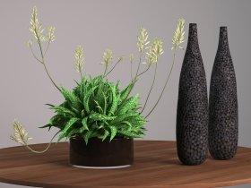 Succulent Plant Decoration