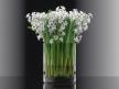 Hyacinth 4