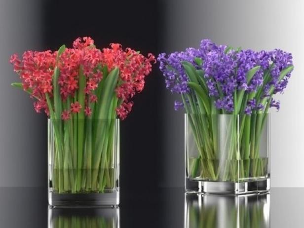 Hyacinth 8