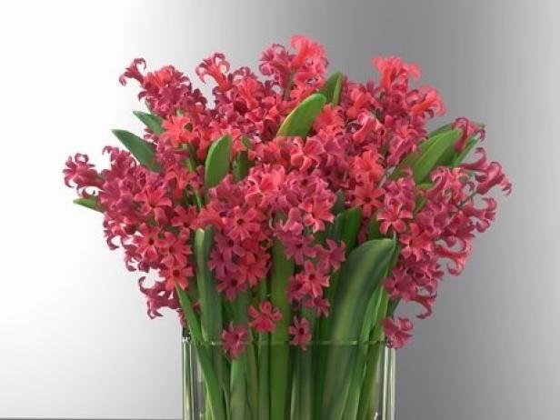 Hyacinth 9