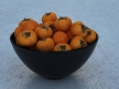 Persimmons 12