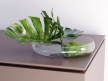 Philodendron Dianthus Vessel 1