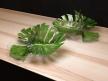 Philodendron Dianthus Vessel 4