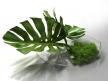 Philodendron Dianthus Vessel 9