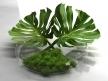 Philodendron Dianthus Vessel 8