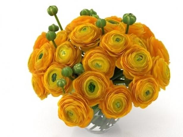 Orange Ranunculus 4