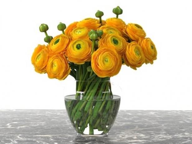Orange Ranunculus 1