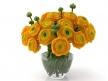 Orange Ranunculus 5