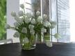 Tulips 01 11