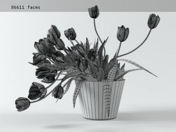 Tulips 01 17