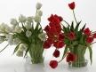 Tulips 01 1