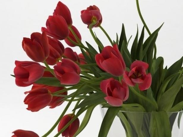 Tulips 01 3