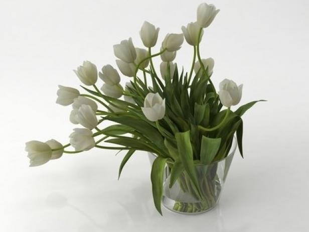 Tulips 01 6
