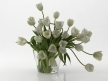 Tulips 01 4