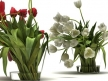 Tulips 01 14