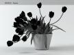 Tulips 01 18