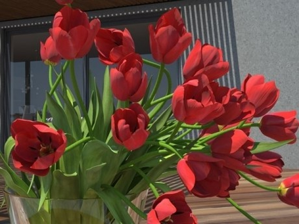 Tulips 01 8