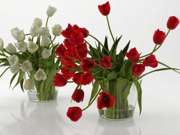 Tulips 01 16
