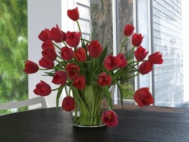 Tulips 01 9