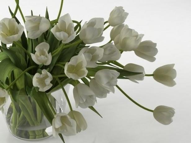 Tulips 01 5
