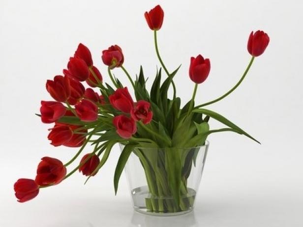 Tulips 01 2