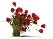 Tulips 01 13
