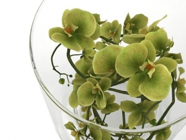 Green Orchid 10