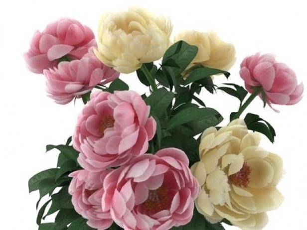 Flowers 03 5