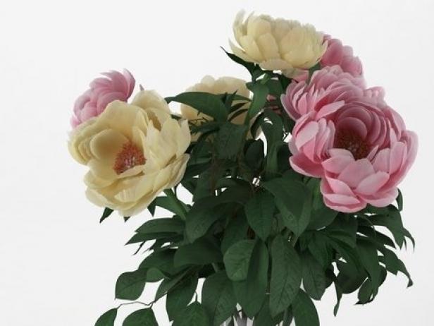 Flowers 03 9