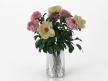 Flowers 03 7