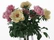 Flowers 03 4