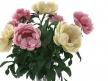 Flowers 03 6