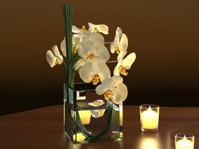 White Orchids in Square Vase